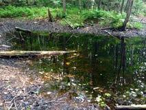 Palude nella foresta Fotografia Stock Libera da Diritti