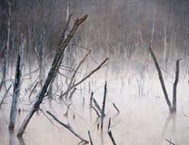 Palude spettrale con gli alberi guasti Fotografie Stock Libere da Diritti