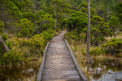 Palude TrailVancouver Isla di Shorepine Fotografia Stock