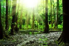 Palude in una foresta Immagine Stock Libera da Diritti