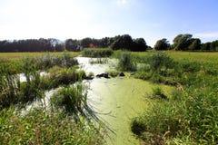 Palude verde Fotografia Stock