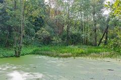 Palude verde fertile e scena tropicale della foresta Il sole sta alzando attraverso il fogliame spesso per rivelare un paesaggio  fotografia stock