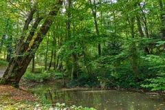 Palude verde fertile e scena tropicale della foresta Il sole sta alzando attraverso il fogliame spesso per rivelare un paesaggio  Fotografie Stock Libere da Diritti