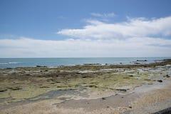 Palude vicino all'oceano fotografia stock libera da diritti