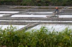 Paludi d'acqua salata della Francia occidentale Immagine Stock Libera da Diritti