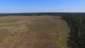 Paludi e paludi, riserva di Obara, metraggio aereo video d archivio