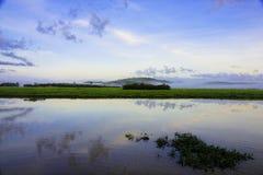 Paludi Kaw in Guyana francese Fotografia Stock Libera da Diritti