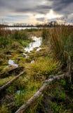Paludi pericolose e sabbie mobili vedute da un grande lago nella regione selvaggia Fotografia Stock Libera da Diritti