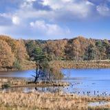 Paludi tranquille con una colonia di uccelli in autunno, Turnhout, Belgio Immagine Stock