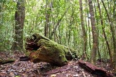 Paluma Range National Park. Rain Forest Paluma Range National Park Queensland Australia Royalty Free Stock Photography