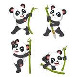 palying与绿色竹子的熊猫的逗人喜爱的收藏 向量例证