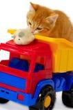 palying小猫的鼠标 免版税库存图片