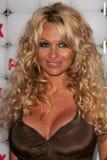 Pamela Anderson royalty free stock photos
