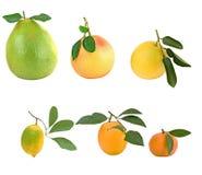 Pamelo, mandarines, pamplemousses et images libres de droits