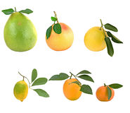 Pamelo, tangerines, grapefruits and. Orange isolated on white background Royalty Free Stock Images