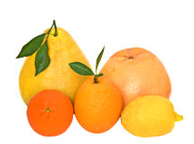 Pamelo, tangerines, pamplumossa, limão e laranja Imagens de Stock