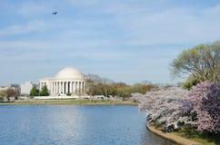 pamiątkowa Dc wiosna Jefferson Washington obrazy royalty free