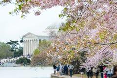 pamiątkowa Dc wiosna Jefferson Washington obrazy stock