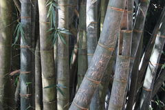 Pamiątkowi inskrypcja turyści na bambusie Obrazy Royalty Free