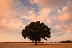 Pamiątkowy drzewo na tajemniczym miejscu Zdjęcia Royalty Free
