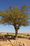 Pamięci drzewo - Gobekli Tepe Potbelly wzgórze zdjęcia royalty free