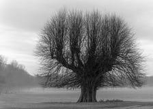 Pamiątkowy drzewo Fotografia Stock
