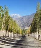 Pamir mountain Wakhan road and alley of poplar trees. Pamir highway, road and alley of poplar trees and Pamir mountains, Wakhan corridor and valley, Gorno royalty free stock images