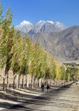 Pamir mountain Wakhan road and alley of poplar trees. Pamir highway, road and alley of poplar trees and Pamir mountains, Wakhan corridor and valley, Gorno stock photography