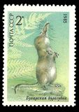 Pamir Shrew. USSR - stamp printed in1985, Series Animals protected, Pamir Shrew Stock Photo