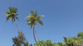 Pamltrees en Hemel stock footage