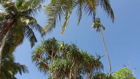 Pamltrees and Sky. stock footage