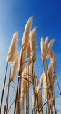 pampa травы Стоковое фото RF
