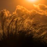 Pampa alta contra el cuadrado de Trinidad y Tobago de la luz del sol del verano brillante Imagenes de archivo