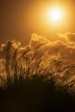 Pampa alta contra la luz del sol Trinidad y Tobago del verano brillante Imagenes de archivo