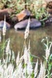 Pampa au rivage de rivières Images libres de droits