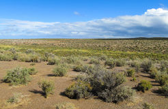 Pampa bushes until horizon Royalty Free Stock Photos