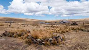 Pampa Galeras (II) - Peru Stock Photography