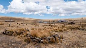 Pampa Galeras Peru - (II) Fotografia Stock
