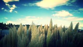 Pampas χλόη και προκυμαία Στοκ εικόνα με δικαίωμα ελεύθερης χρήσης