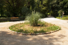 Pampas grass on flowerbed photo of central park in Athens, Greece Royalty Free Stock Image