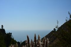 Cortaderia selloana commonly known as pampas grass Big Sur Canyon HWY 1 Stock Images
