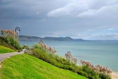 Pampas Grass ~ Lyme Regis Stock Images