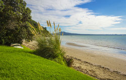 Karaka Bay Beach Auckland New Zealand. Pampas Grass at the Seaside of Karaka Beach Royalty Free Stock Images