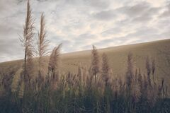 Pampas Grass with Sky in Background Stock Photos