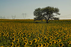 Pampas Landscape, Stock Image