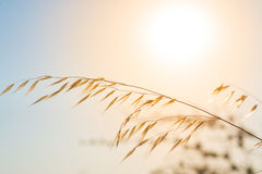 Pampas with sun and sky in the background Stock Image