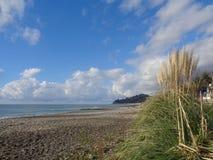 Pampasgräs på stranden, Black Sea kust av Ryssland Arkivfoton