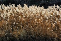 Pampasy trawy na riverbank obrazy stock