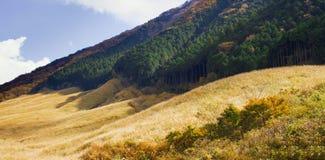 Pampasy trawy pole przy sengokuhara Hakone Zdjęcia Royalty Free
