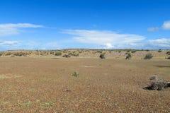 Pampawüste bis Horizont Stockbilder